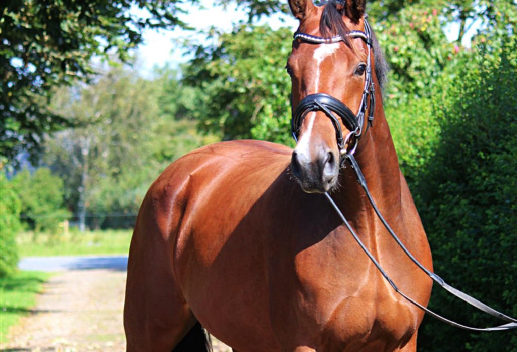 Hestefoder til specielle behov